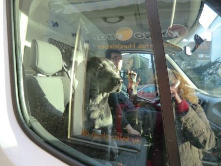 Unser Transporteur Marko mit Hund